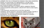 Как видят кошки: зрение домашних питомцев — все о зрении